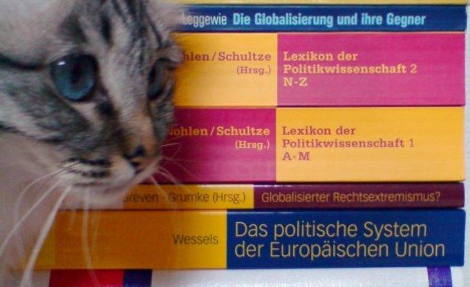 Politik und Katzen