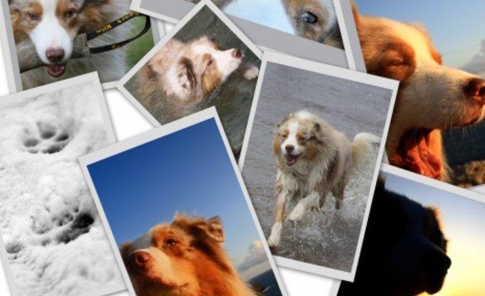 Der Hund Blieb Mir Im Sturme Treu Der M Ensch Nicht Mal Im Winde