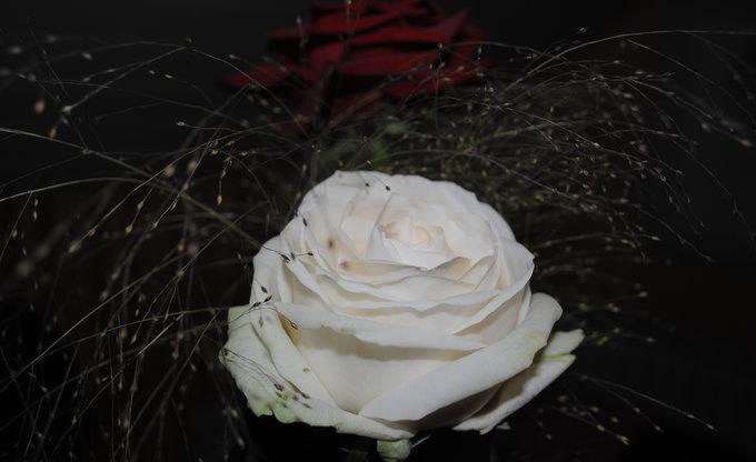 Rosen im Detail