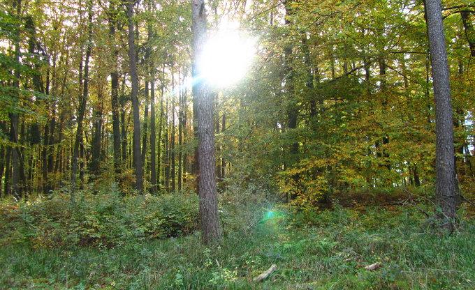 Bunt sind schon die Wälder...