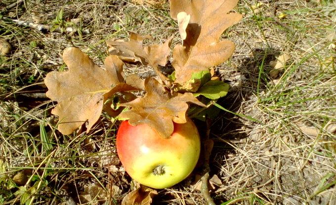Der Apfel fällt nicht weit vom Stamm??