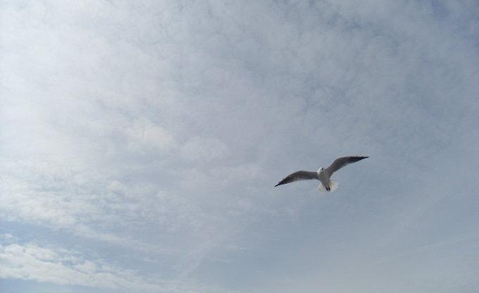 Möwenflug über 'm Schiff