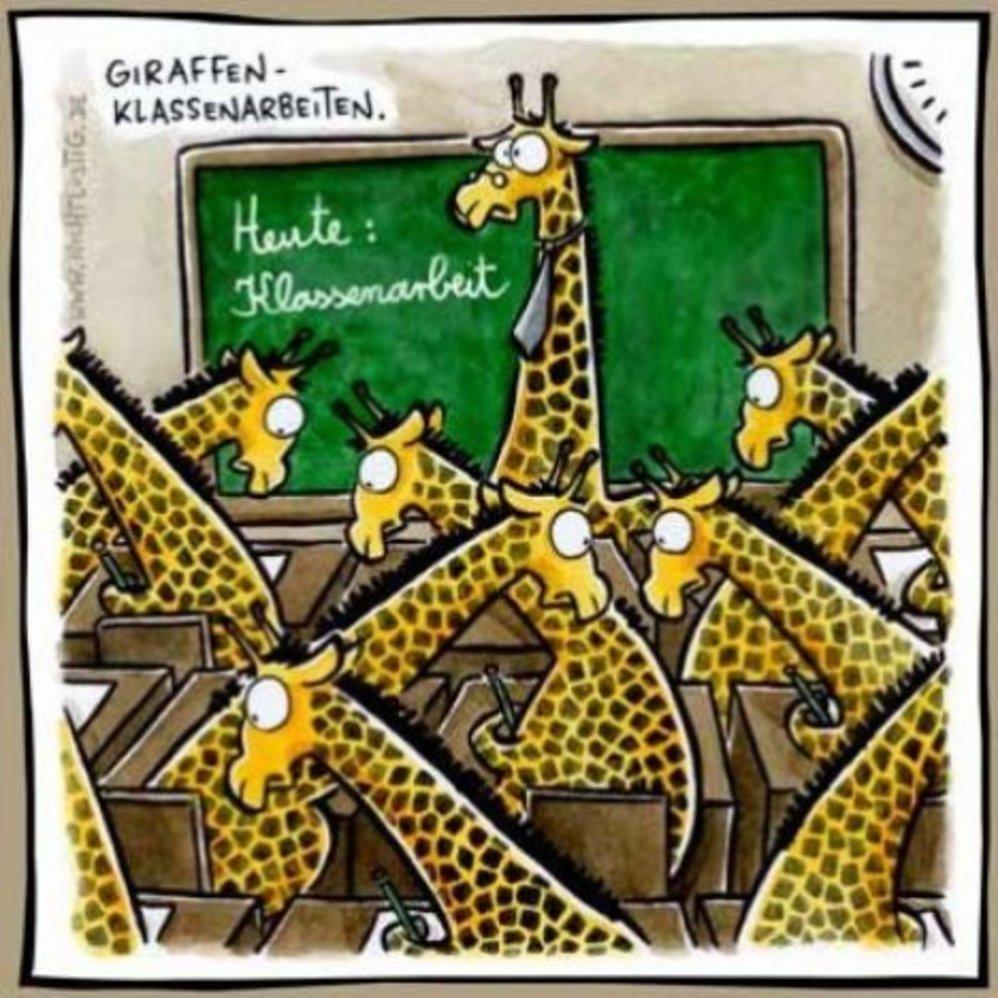 giraffen klassenarbeit